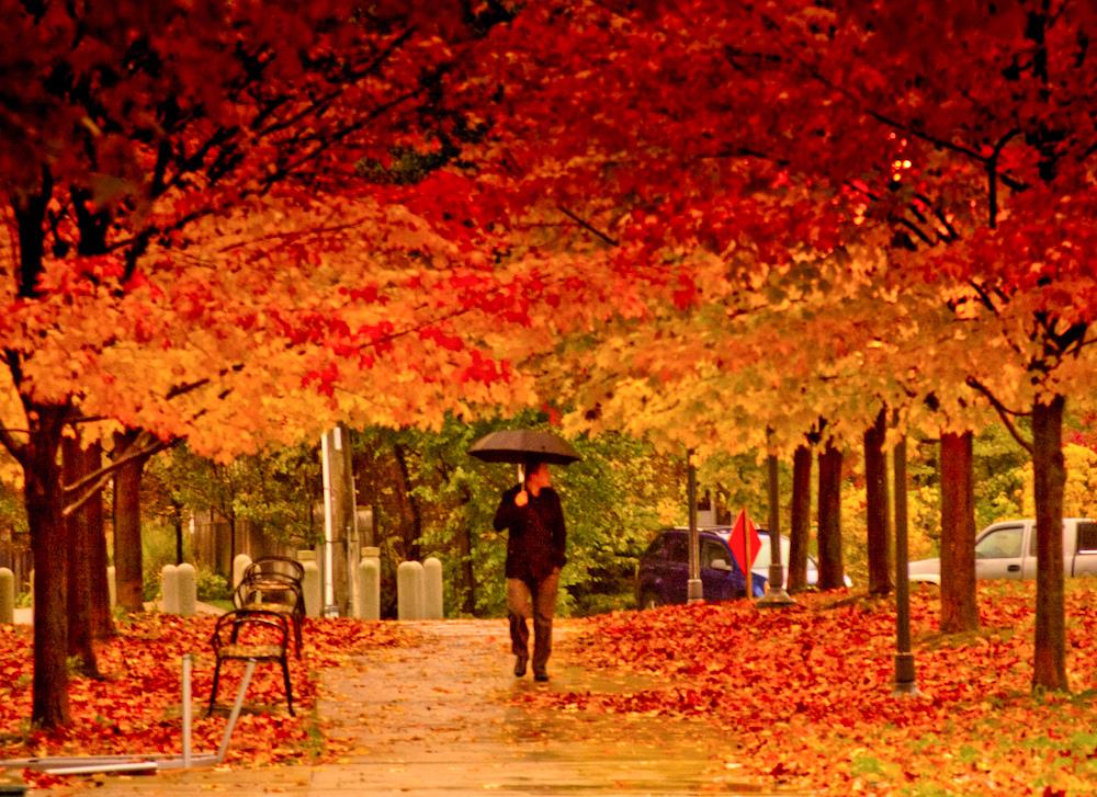 2. Autumn